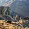 Caça em alta montanha europeia.