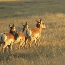 Wyoming, território de caça.
