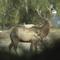 Veado-mulas de Montana.