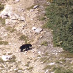 Meat Eater: Las Montañas Rocosas del Norte. Oso Grizzly (parte 2).