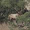Meat Eater: O monstro de Gila: Elk no Novo México.